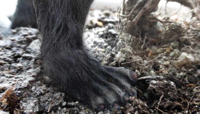 Stalked Through the Woods by a Texas Bigfoot: Do You Believe the Story?