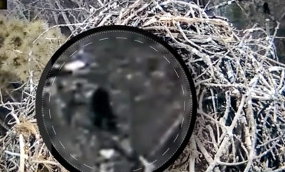 bigfoot webcam