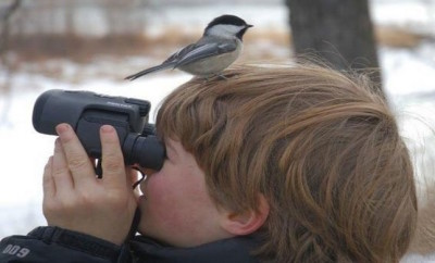 5 Useful Tips to Create a Birder's Paradise