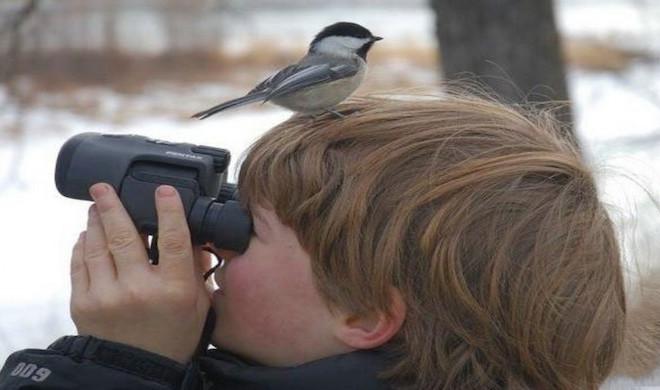 5 Useful Tips to Create a Birder's Paradise