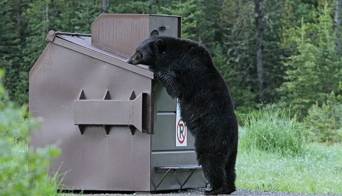 black bear dumpster