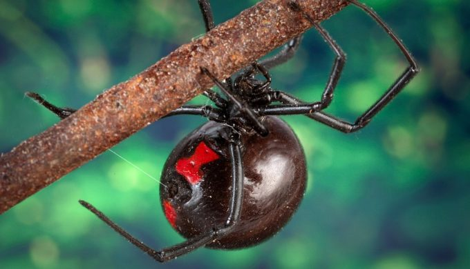 Seven Most Dangerous Creatures Native to Texas According to Houston Museum of Natural Science