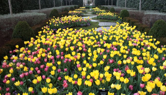 Dallas Arboretum is Ready for Spring: Big Blooming Fun!