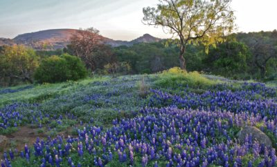 Wine and Wildflowers: The Most Relaxing Tour Through the Hill Country