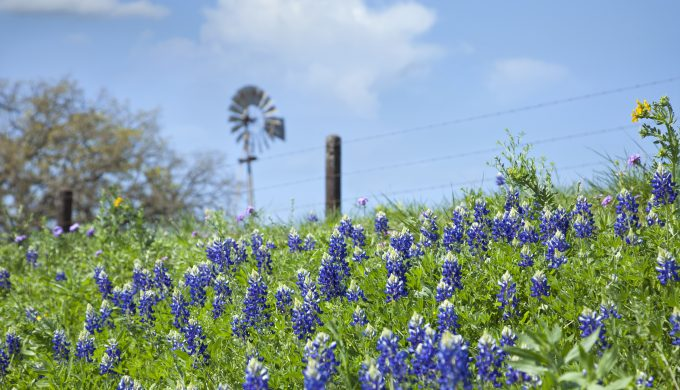 Texas Scenic Views App Leads Texans to Unbelievable Wildflower Displays