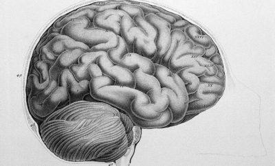 brain Spanish