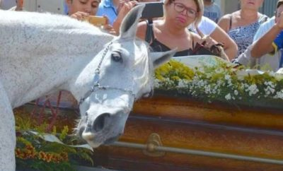 Sereno the Horse Mourns Death of its Human