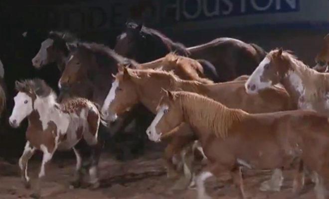 bucking horses