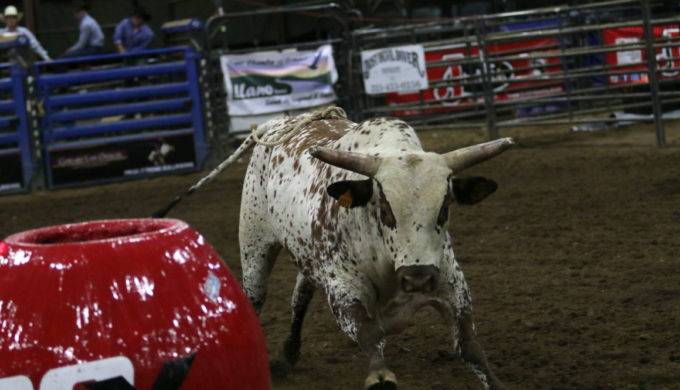 The Bulls are Back in Town: Pro-Bull Riding Returns to Llano