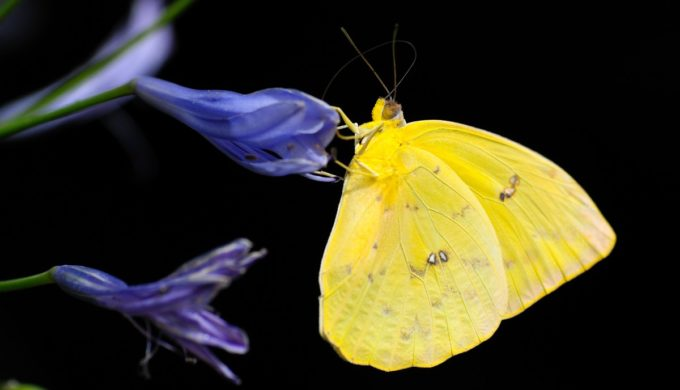 Butterfly in My Pocket: A True Tale From a Texas Teacher