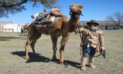 Discover Camp Verde - Home of Historic US Army Camel Corps