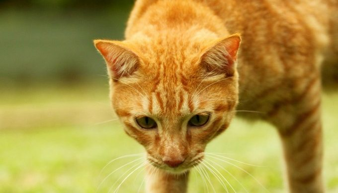 cats eat scorpions