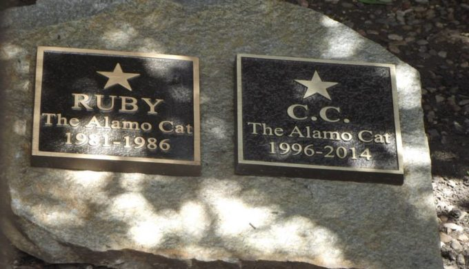 Did You Know the Alamo is Home to the Graves of Two Beloved Cats?