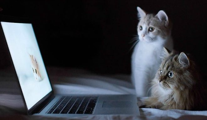 Love Cat Videos? CatVideoFest Is Coming To a Theater Near You!
