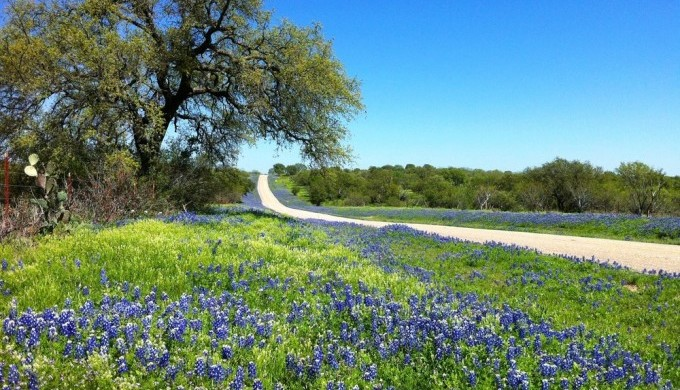 hill country back roads on a Hill Country Spring night