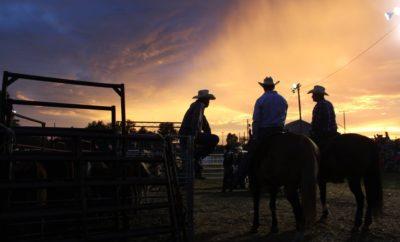 real Texas cowboy