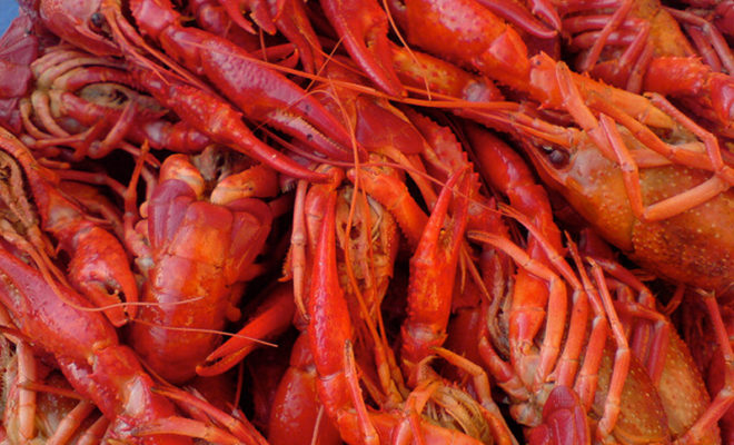sorry taste buds you ll have to wait crawfish season will be late