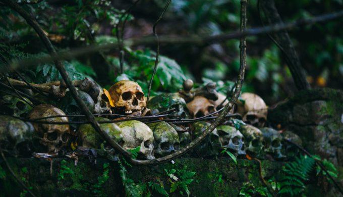 Skull Photo by Cristian Grecu