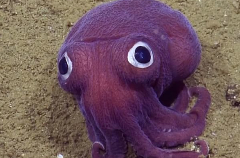 Cute Squid Has Scientists Gasping With Excitement Watch