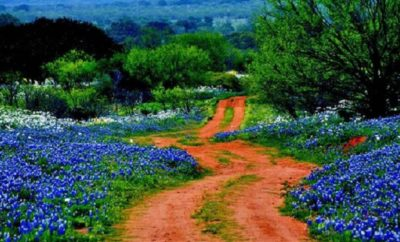 Country Living Magazine Archives Texas Hill Country