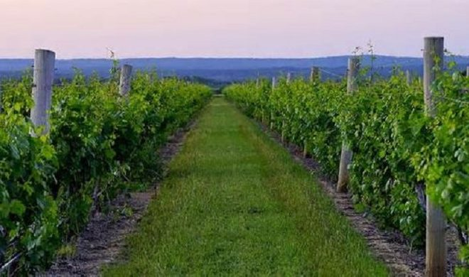 Texas Hill Country Wine Region Makes Lonely Planet Top-10 List