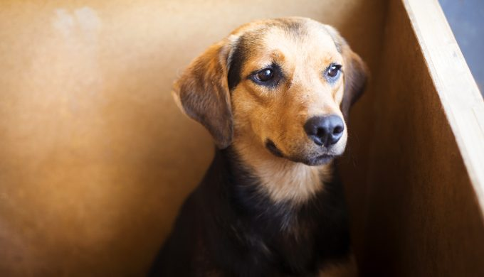 How are Texas Shelter Animals Faring Through COVID-19?