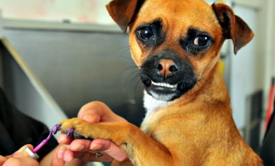 Does Your Dog Need a 'Pawdicure'? Pamper Your Pooch With Pet-Friendly Nail Polish