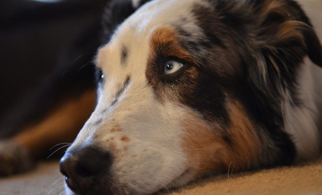 How to cure noise anxiety in dogs