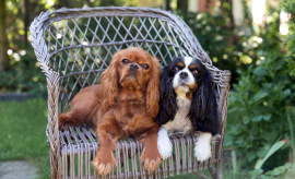 Easy & Effective Ways to Help Your Dogs Keep Cool in the Heat