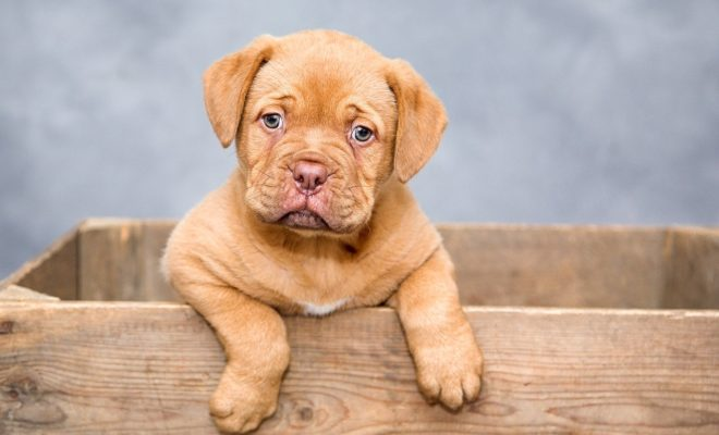 Puppy-love: Get Paid $100 an Hour to Pet Puppies!