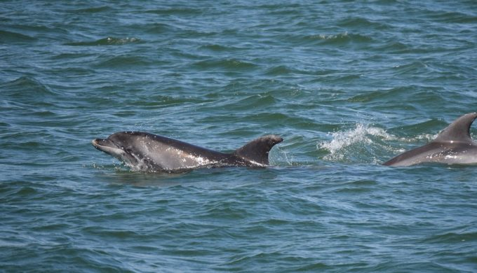 A Texas Dolphin-Watching Tour Provides Everything You Need For Fun in the Sun