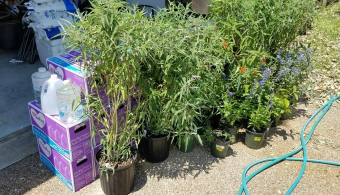 donated plants