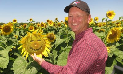 Flower Power: North Texas Sunflower Fields are a True Treasure