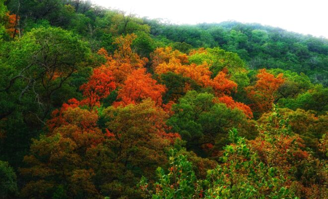 Hiking Lost Maples: A Video Tour of This Texas State Natural Area