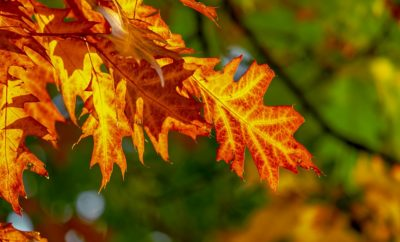 Where Can You See the Best Fall Foliage in the State of Texas?