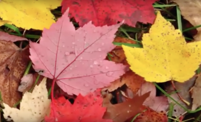 Find Out Why Leaves Change Color in the Fall [Video]