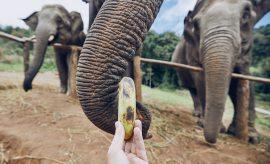 Fredericksburg Elephant Preserve has Some Famous Residents