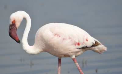 Escaped Flamingo Living 'On the Lam' Makes Recent Appearance in Texas