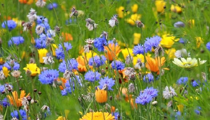 Wildflower Sightings Website Helps Plot Out Perfect Texas Road Trip