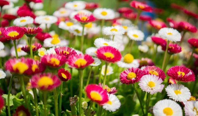 7 tips for your best spring garden ever mightylinksfo
