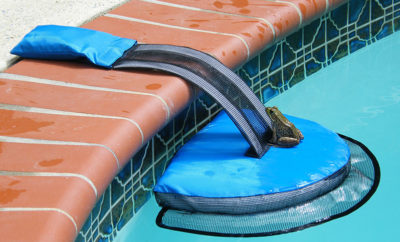 FrogLog Invention Keeps Critters From Drowning in Your Pool