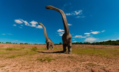 Mystery Tracks: Did These Texas Dinosaurs Do Handstands?