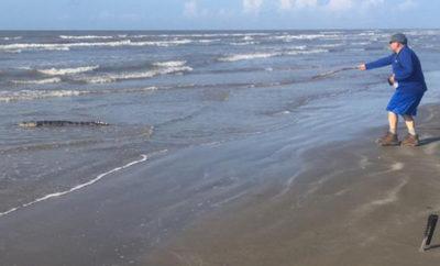gator on beach