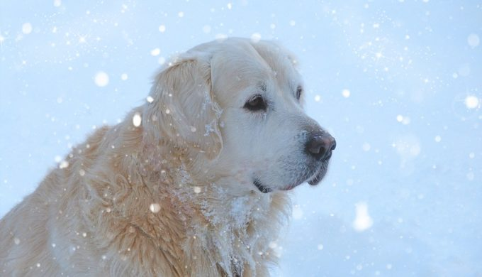 Loving Dog Keeps Owner Alive in Freezing Temperatures