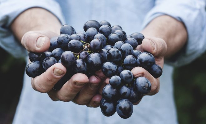 Lone Star Pride Drives the Booming Texas Wine Industry to New Heights
