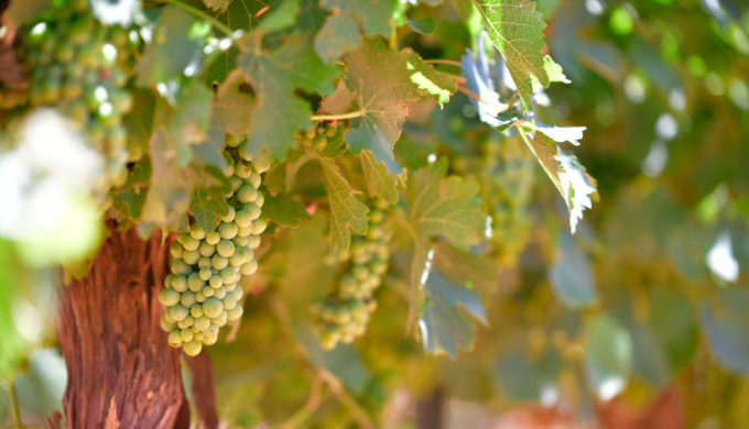 Heath: A Sparkling Summer on Wine Road 290 in the Hill Country