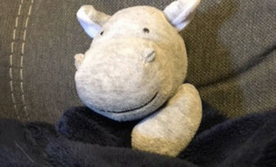 stuffed hippo