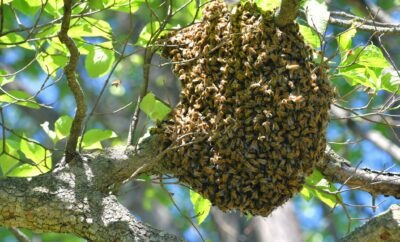 Bees Living Inside a Tree Attack and Kill a Texas Man