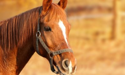 How Much Does it Cost to Own a Horse? Budget Well