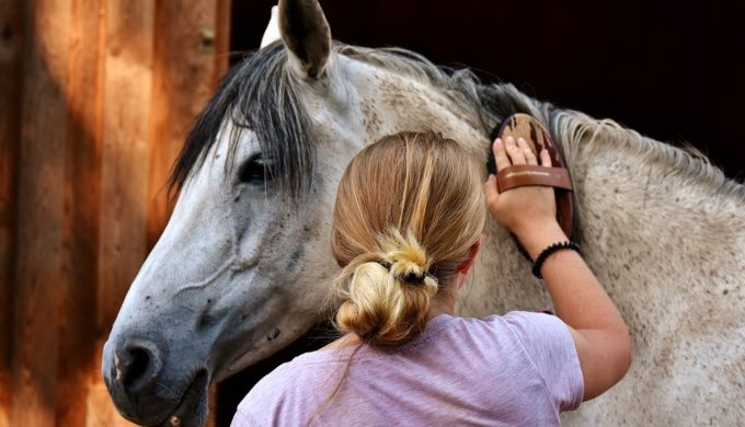 Horse Photography: Tips for Taking an Amazing Photo of Your Best Friend